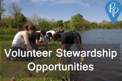 Page_25_Volunteer_-_Volunteer_Stewardship_Workday_at_Washington_Park_2